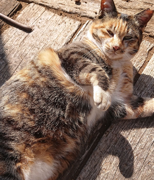 庭に住む地域猫