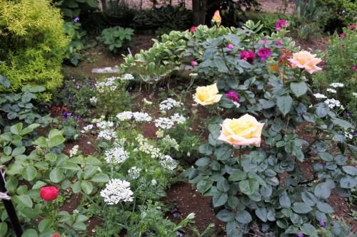 ピースが咲く庭