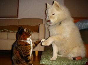 犬と猫が協力しおやつのグレードアップ