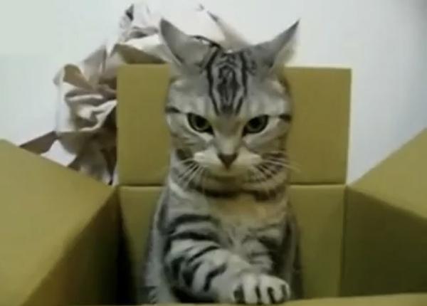 おとといから行方不明のネコが着払いでかえってきた