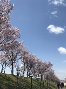 写真 2019-03-31 11 55 38
