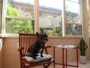 愛犬のチョコちゃん
