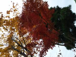 17-11-30-13-35-24-580_photo