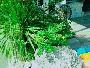 18-07-09-09-06-12-023_photo