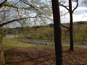 20-04-17-15-53-10-342_photo