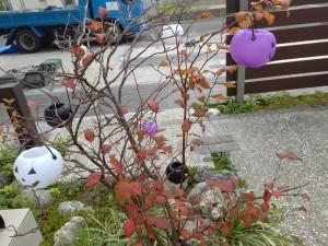 20-10-14-10-28-33-902_photo