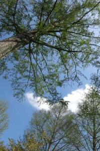tree 21April