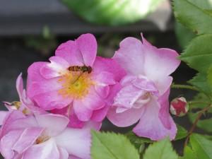 16MAY2019 bee