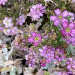 micro flower