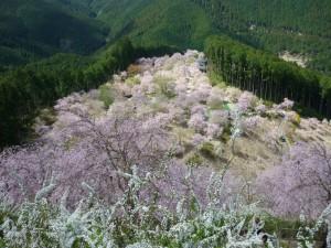 天空の桜3