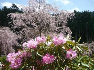 天空の桜4