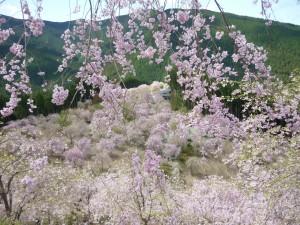 天空の桜2