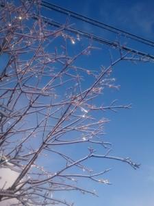 氷りの枝・・・