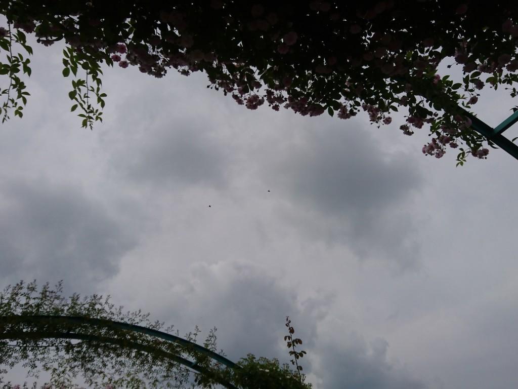 アーチの薔薇の葉と二匹の蜜蜂