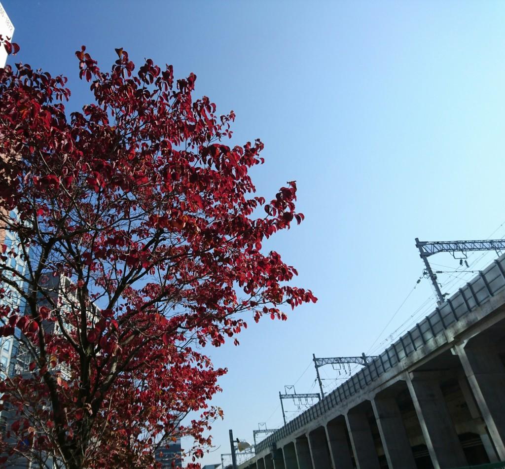 青空とハナミズキの紅葉