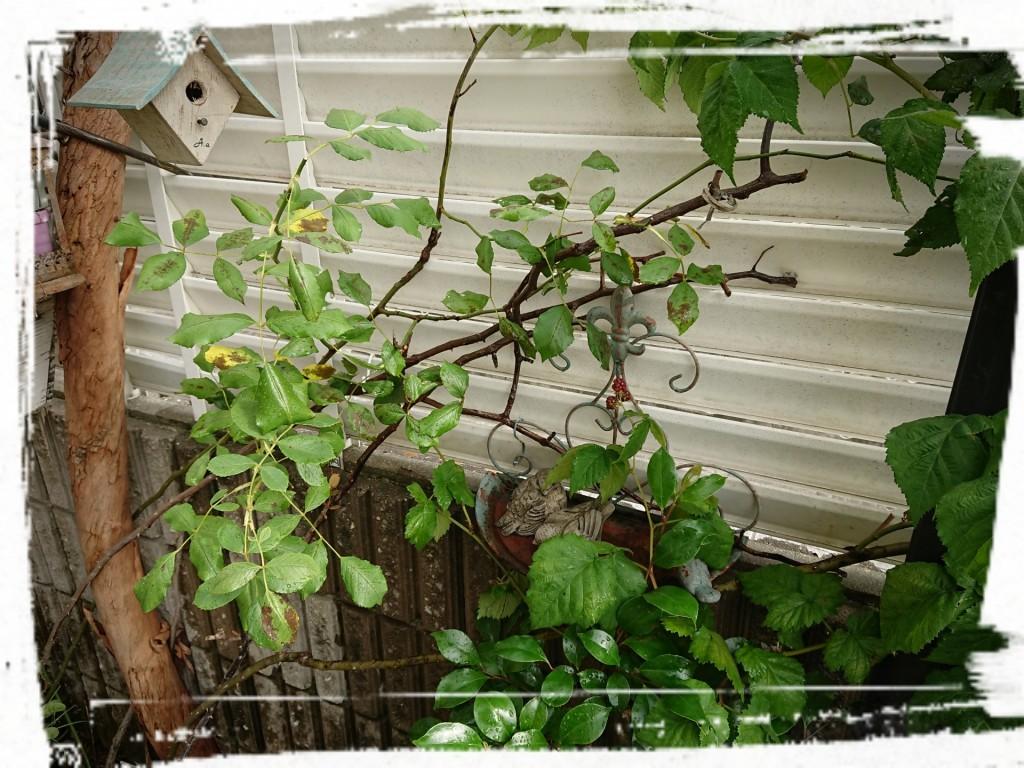 ユーカリの木とツルバラ 椿にフジバカマ