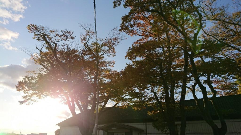山居倉庫の側の並木