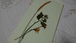 押し花に、、、