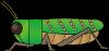 locust_a03