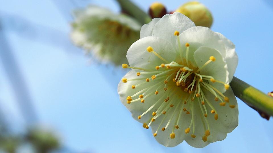 京都のhory garden日記
