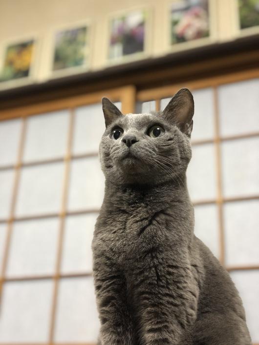 愛猫 みぃちゃん