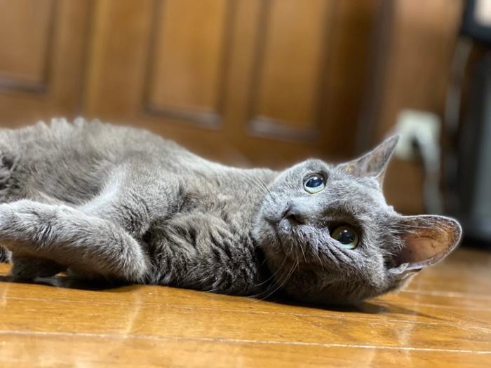 愛猫 みぃ