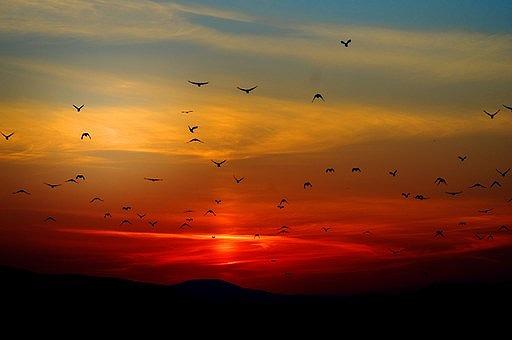 sunset-100367__340