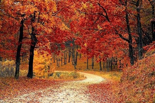 fall-1072821__340