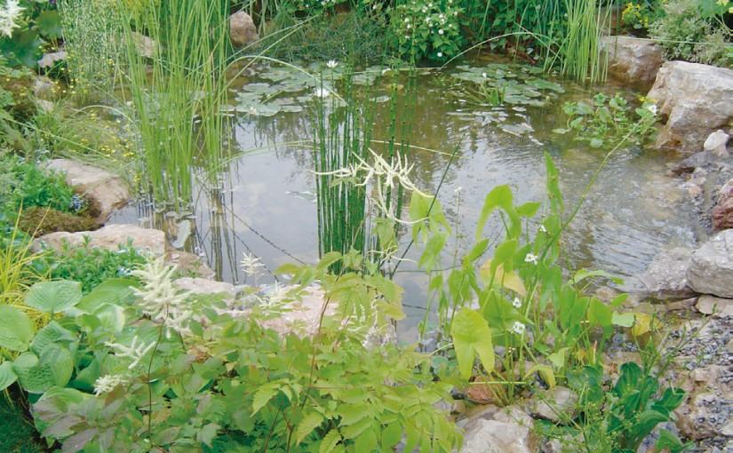水生植物 の演出