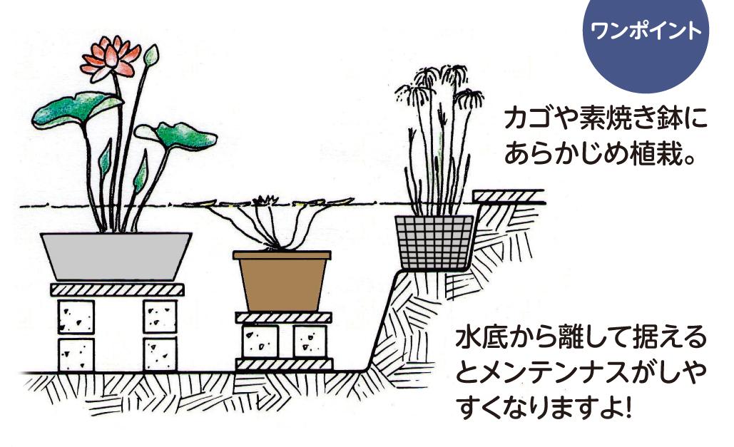 水生植物の演出 ワンポイント
