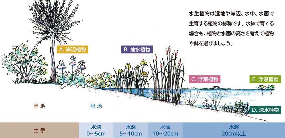 水生植物の種類