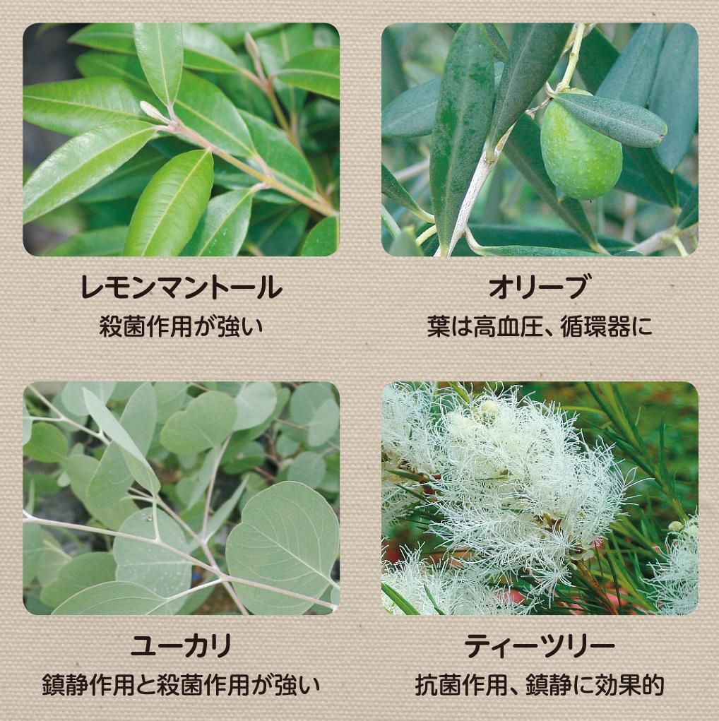 アロマセラピーの効果がある植物