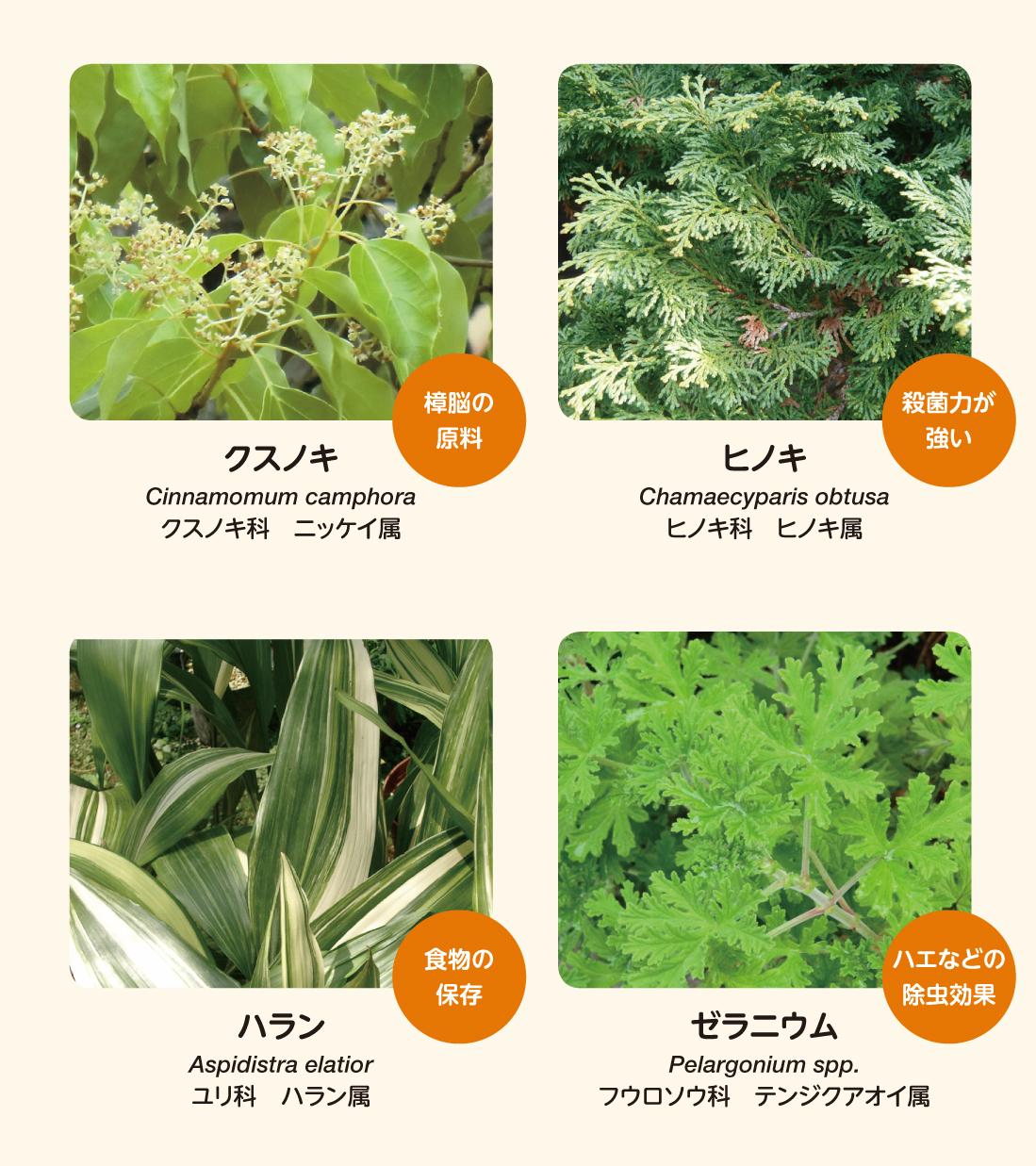 病気予防・防虫効果のある植物たち