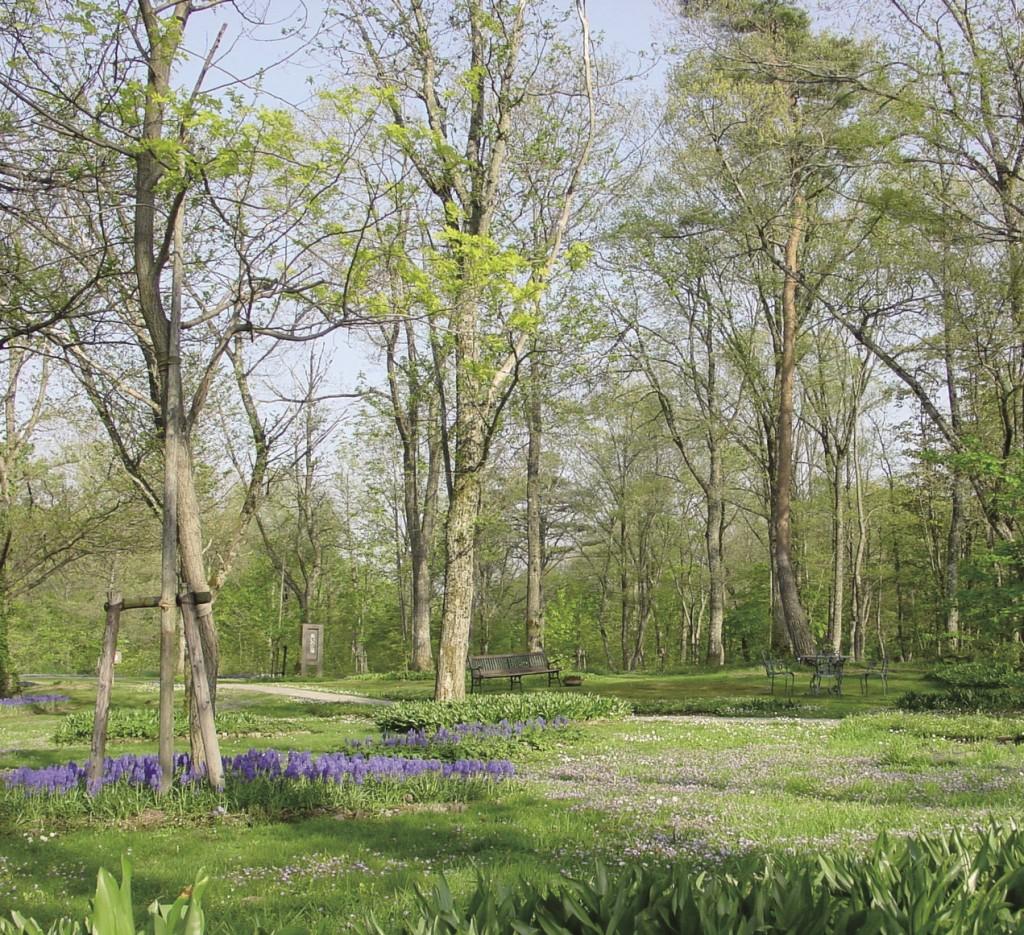落葉樹の葉が展開する前に、林床に咲き乱れる早春の宿根草
