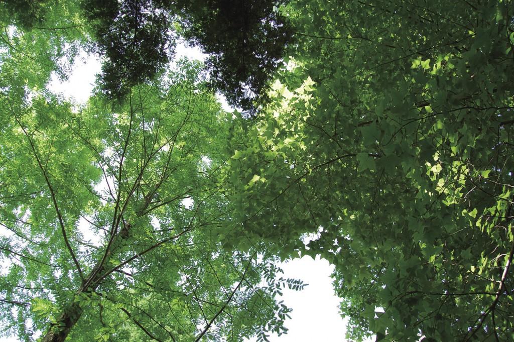 多様な樹木が育つ森( 兵庫県 但馬高原植物園)
