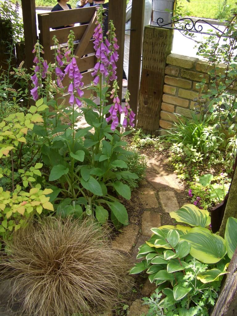 ジキタリスの存在が、ガーデンをゴージャスに