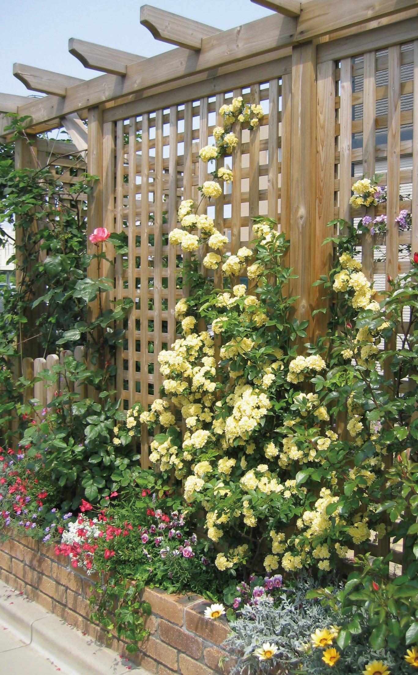ガーデンリフォーム つるバラの提案1 After