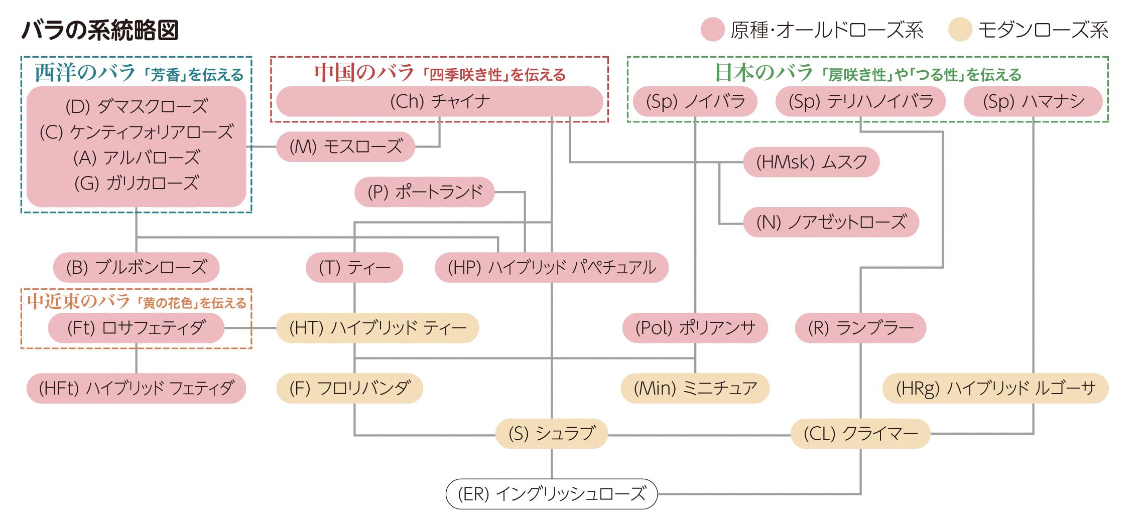 バラの系統略図