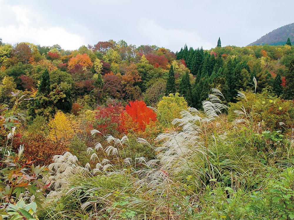 日本の山の美しい秋の風情