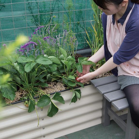 自分で育てて収穫できる家庭菜園