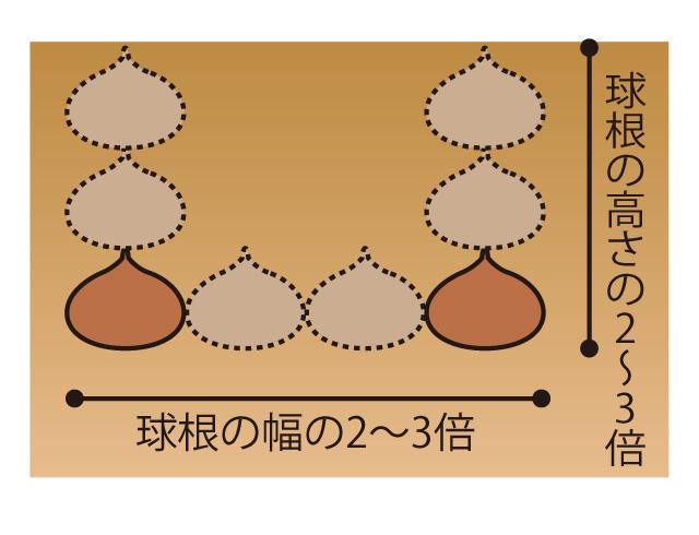 球根の植え付けポイント
