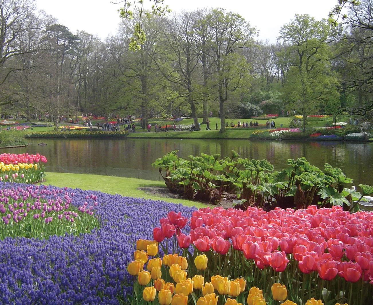 チューリップ、ヒヤシンス、スイセンなど約4000種類、数百万本の球根花が林床に植え付けられた、春らしい色彩と香りあふれるキューケンホフ公園(オランダ)