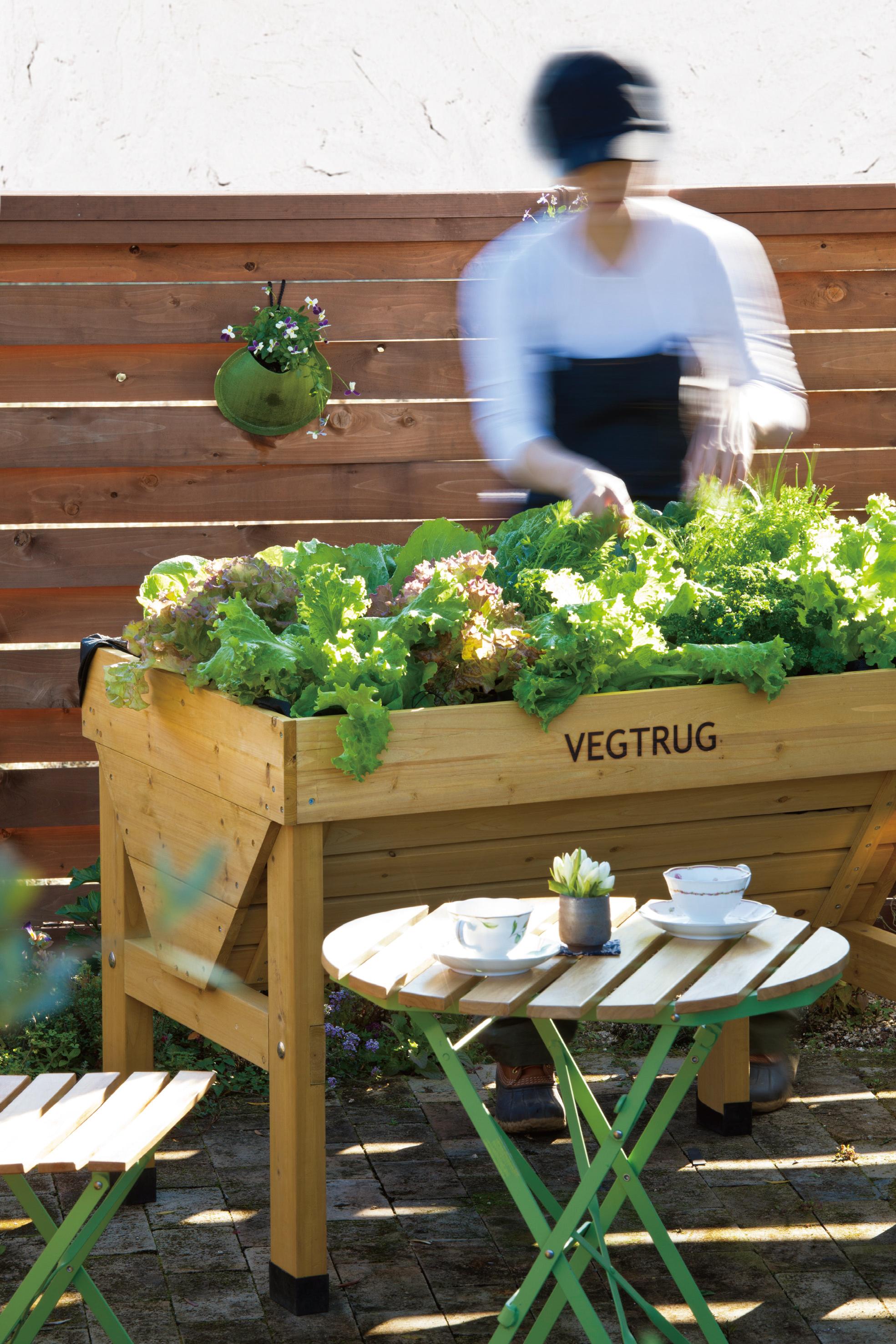 楽しい家庭菜園 葉菜・花菜類を育てる