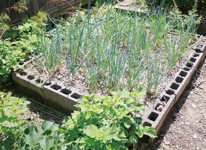 薬草・香草を育てる レイズドベッドを活用する