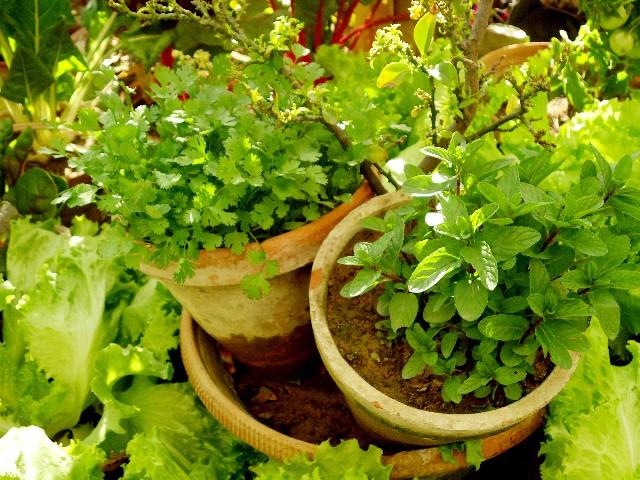 ガーデンセラピーのすすめ 食事療法