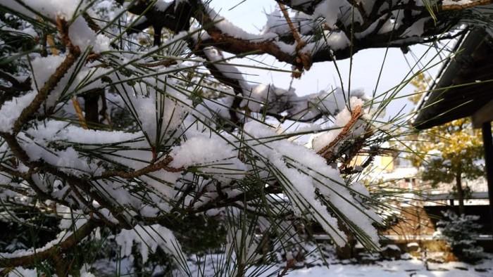31121松葉雪