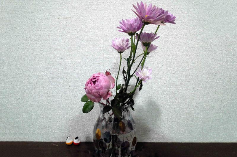 剪定したER セプタードアイルの花と1月以上もっている切り花のキク