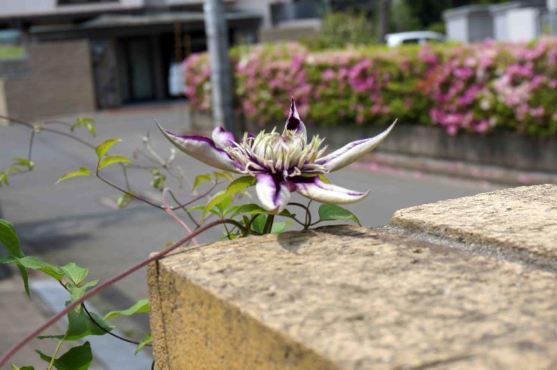 紫子丸,2017年5月24日