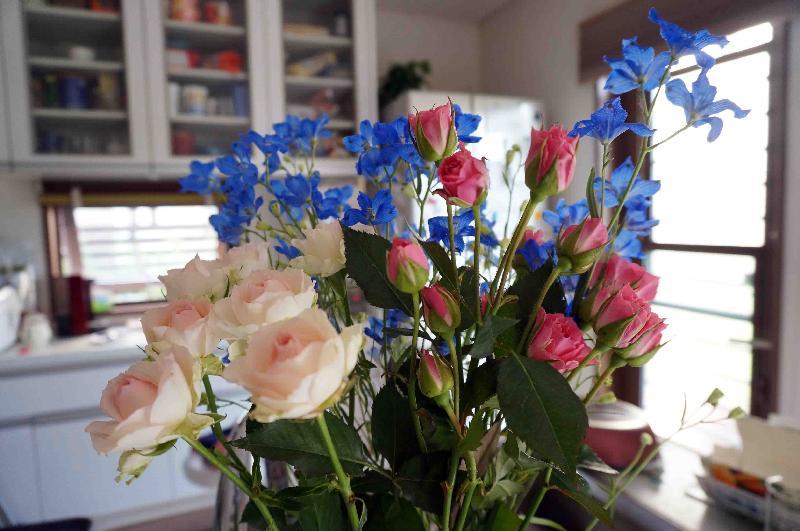 切り花のデルフィニウム,2017年5月23日