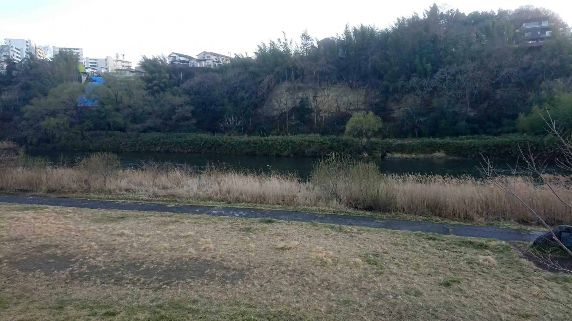 カワアイサ,広瀬川